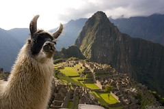 Llama, Machu Picchu (Burrard-Lucas Wildlife Photography) Tags: peru machu picchu inca ruins llama