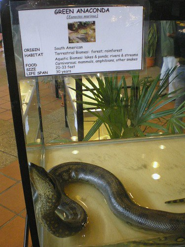 Snake13