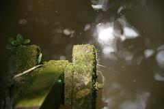 Under the old bridge (William Ong - William Photography ) Tags: oldbridge undertheoldbridge