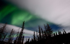 Peeking Through (Wolfhorn) Tags: trees nature alaska clouds stars long exposure nightscape moonlight auroraborealis
