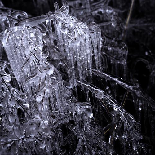 Freezes #4