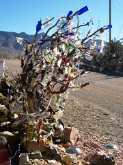 Bottle tree, in a bad need for some pruning ou...