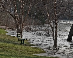 Spring in Wisconsin Rapids (pennyzphotolane) Tags: trees water grass river bench spring flood penny hansen wisconsinriver wisconsinrapids pelot absolutelystunningscapes pennyzphotolane