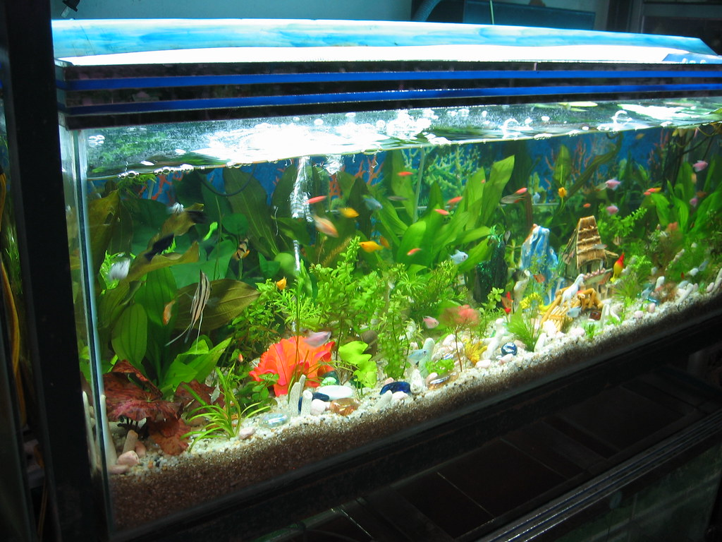 Tropical Fish, with no tank heater!