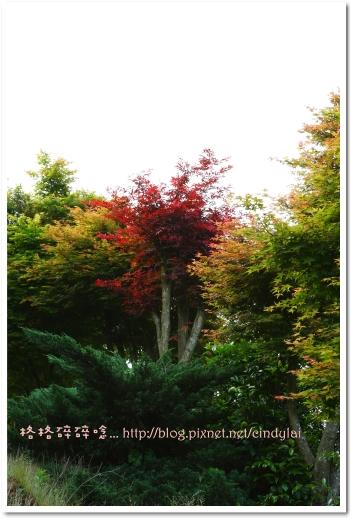 20080503楓紅_031
