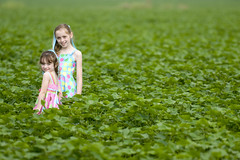 cotton kids