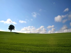 Cornfield Classic (Anthony Thomas [aka wabberjocky]) Tags: windows wallpaper sky tree classic nature field landscape corn cornfield naturesfinest blueribbonwinner golddragon anthonythomas platinumphoto anawesomeshot theunforgettablepictures colourartaward theperfectphotographer naturemasterclass wabberjocky absolutelystunningscapes