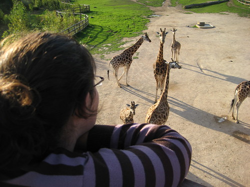 Ann and the giraffes
