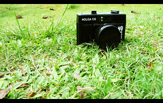 holga (baby-on-board) Tags: green grass lomocamera holga135
