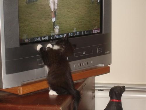 Minnie watching Football