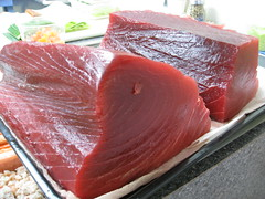 Beautiful Bluefin