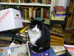 Boris in the Bookshop (eagle stirreth) Tags: cats cat glasgow books boris bookshop voltaire rousseau