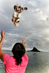Dogs fall from heaven...(1 of 2) (NeilNorman Light Tamer) Tags: ocean dog beach dogs water hat swim hawaii sam shih tzu calm hoy waters laughter doggy vignette chinamans blueribbonwinner golddragon mywinners anawesomeshot aplusphoto superhearts photofaceoffwinner platinumheartaward