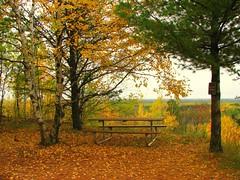 Autumn Picnic (Micky**) Tags: autumn fall leaves minnesota yellow golden micky picnic view picnictable fallenleaves elylakeoverlook happythanksgivingdearfriend zlimen gilbertohvpark