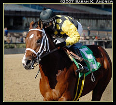 Longshot winner Another Foose (Rock and Racehorses) Tags: horse newyork yellow rail aqueduct colt arroyo gallop longshot anotherfoose cityzip