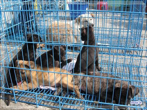 0902靜如結婚跟狗的照片 010111