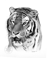 Tiger 03 (pbradyart) Tags: portrait art pen ink artwork artistic drawing expression tiger portfolio pointillism smrgsbord peopleschoice 333views supershot flickrsbest 35faves 25faves golddragon animaldrawing artlibre impressedbeauty aplusphoto onlyyourbestshots superbmasterpiece flickrdiamond allin1 citrit naturewatcher fiveflickrfavs excapture wonderfulworldmix bwartaward spiritofphotography