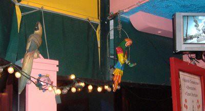 Yucatan Grill - Parrots