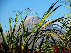 Old God of Fire (Ani Carrington) Tags: field mexico volcano fields colima volcandefuego absolutelystunningscapes