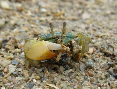 Crab-P1050670