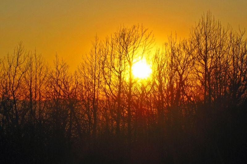Wilhelmina Sunset