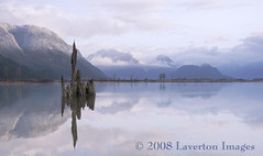 Most Endangered River in B.C. No More? (Jeff L.2007 (Laverton Images)) Tags: mountains landscape britishcolumbia endangered jewel tidalriver pittmeadows naturesfinest powerplay threatened thebestplaceonearth beautifulbritishcolumbia spiritofbc supernaturalbritishcolumbia britishcolumbiatourism runoftheriver natureoutpost pittmeadowstourism hellobc lavertonimages lavertonimages explorebc travelingbritishcolumbia savethepitt privatepower outdoorrecreationcouncil britishcolumbialandscape
