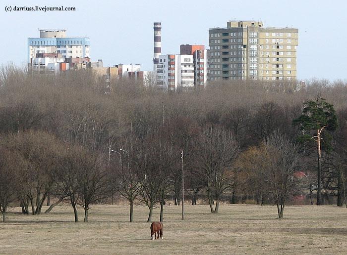 minsk_horse