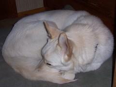 sleepy yama