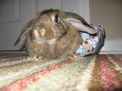 Maybe this was a mistake... (electronization) Tags: rabbit bunny usagi tokidoki