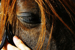 pep sala:fes-me un lloc al teu costat (visualpanic) Tags: horse eye animal ma caballo ojo hand abril mano 2008 cavall ull carcia santpaudordal hpicasantpau