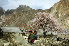 Blossom in upper Hunza 049 (ghazighulamraza) Tags: pakistan landscape awesome el been have hunza fotgrafo northernpakistan gilgit satisfied theb snowpeaks awarded landscapephotography northofpakistan northpakistan byou historyofpakistan mountainsofpakistan astoundingimage northerareasofpakistan satisfechothe pakistanilandscapephotographer ghazighulamraza pakistanilandscapre