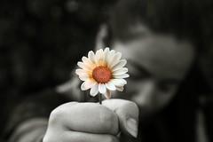 E' lei la mia Pazzia (FotoRita [Allstar maniac]) Tags: life bw italy white black rome flower roma colors digital canon cutout hand mano daisy fiore myfavourites canoneos350d eos350d margherita byfotorita 123bw cinquantinoinoino eleilamiapazzia