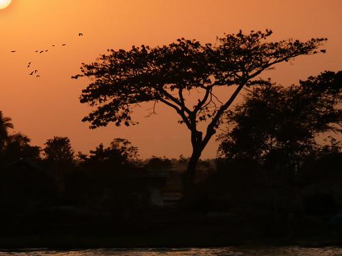 Bangladesh birds
