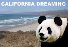 Panda's Spiritual Spot