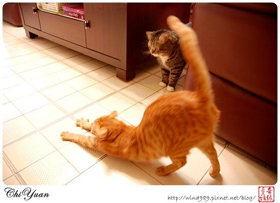 【貓季】赤裸裸的挑釁(DINO+橘子)