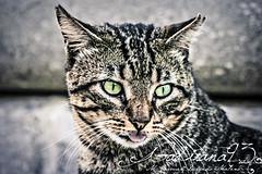 Gato callejero (Gaditana93) Tags: cat gato retrato colornatural calle animal canon canon400d gaditana93 mariadelcarmendelgadomaline