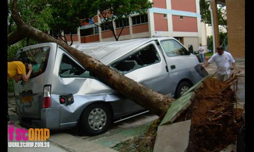 Lightning, then tree crashes into dad's van: He loses sole source of income