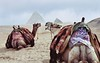 "EGYPT09/ ""the conversation"" (Glenn Losack, M.D.) Tags: sphinx shisha desert egypt nile cairo pyramids aswan luxor souks camels giza hooka ancientegypt egypttourism glosack"