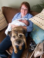 Ollie's reaction (Gavatron) Tags: infant guelph ollie day4 sylvia borderterrier lonan