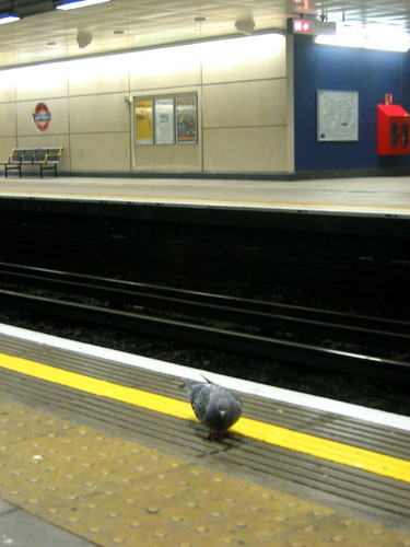 Pigeon on Rails