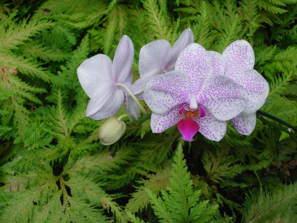 Botanical Garden - Orchid