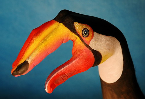 Hand Painted Toucan