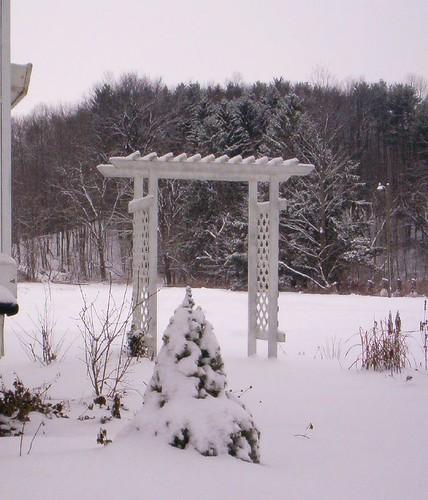 Winter Arbor