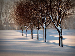 Snow lines (James Jordan) Tags: morning trees snow lines shadows 100v10f line snowfall treeline smorgasbord