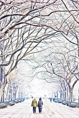 A Series of Mistakes (Thomas Hawk) Tags: road park nyc newyorkcity trees people woman usa snow newyork man tree walking unitedstates centralpark manhattan unitedstatesofamerica over down fav20 covered hanging limbs fav30 fav10 fav25 fav40 superfave