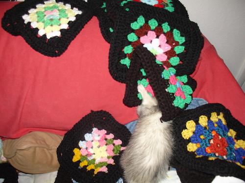 ferret squares