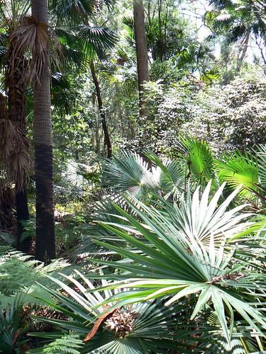 Crommelin Arboretum 1