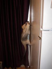 Climbing the curtain