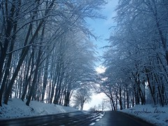 Puck (anka.anka28) Tags: blue sky white snow tree nature grey poland polska naturescall golddragon platinumheartaward treeofhonor
