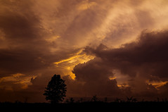 standing still against all odds (mariola aga) Tags: summer evening sunset sky clouds storm stormyweather meadow grass lonely tree silhouette nature thegalaxy